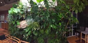 屋内緑化2